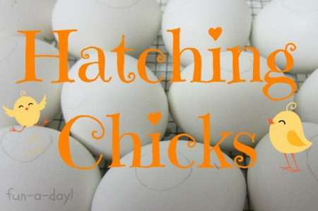 It's an exciting day today!! Our baby chicks are hatching ...